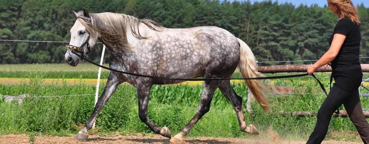 richtig longieren was die longe alles f r dein pferd tun kann. Black Bedroom Furniture Sets. Home Design Ideas