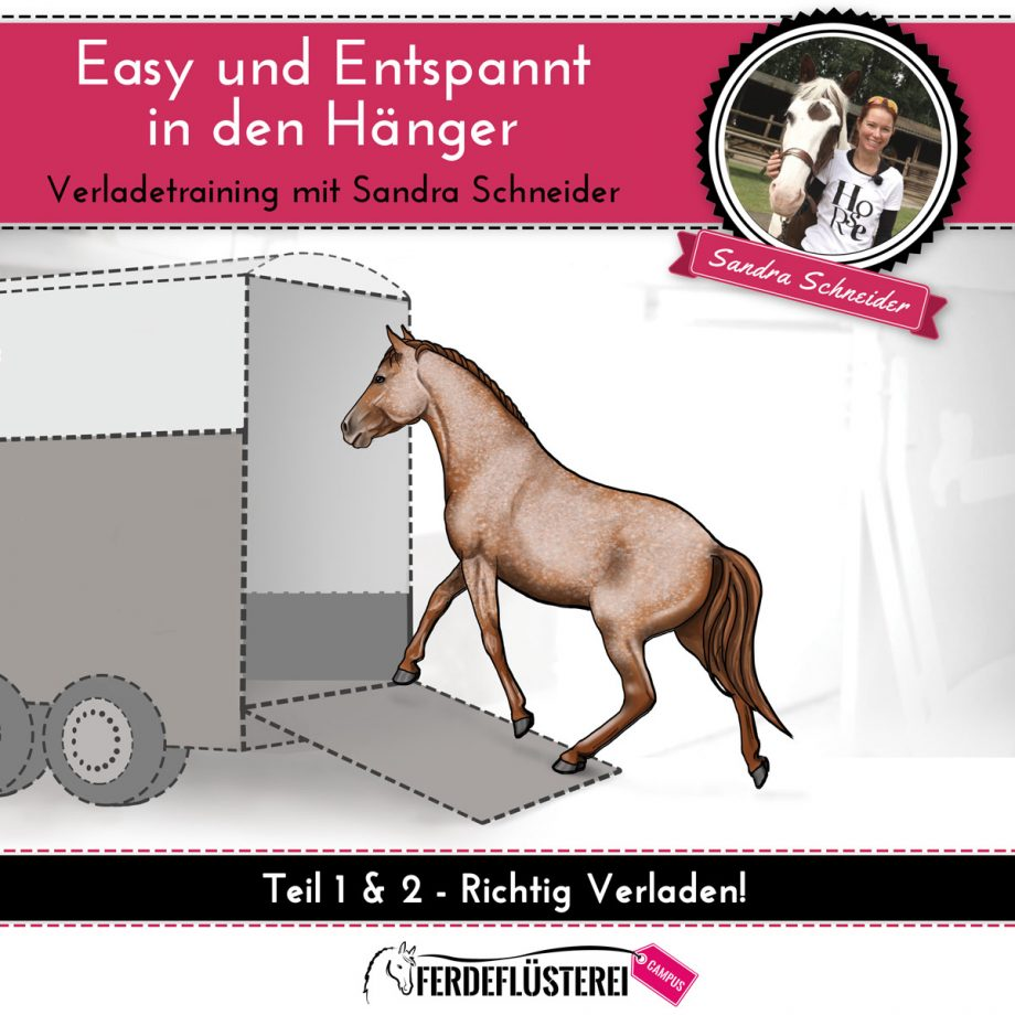dvd-cover-verladetraining-quadrat1-2-neu