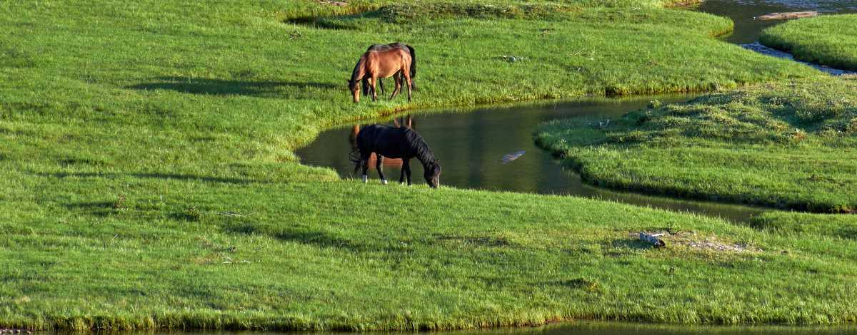 Pferde fressen auf grüner Weide durch die ein Fluss läuft