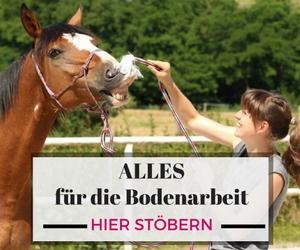 Kopfkino Pferd: Wie du lernen kannst dein Pferd besser zu verstehen 1