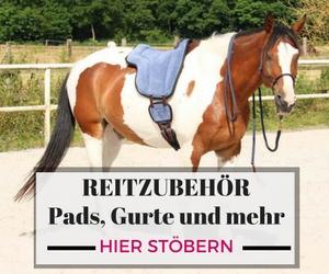 Körperbänder! Wie du ganz einfach mehr Schwung und Losgelassenheit für dein Pferd bekommst 1