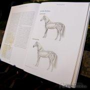 Crystal Verlag Buch Wissen Pferde 5 Elemente Lesebeispiel