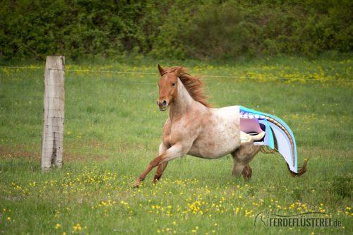 schweif Pferd Bild