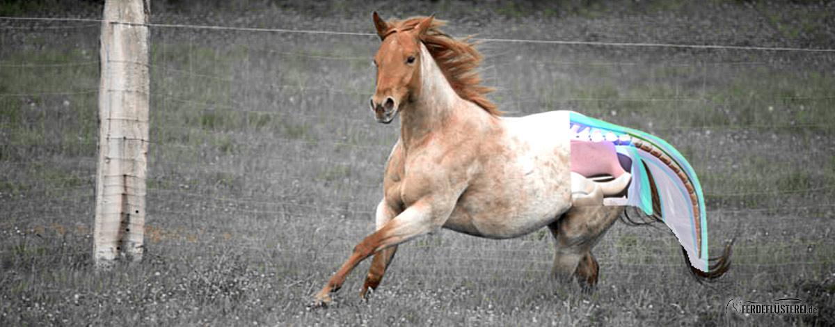 schweif-slider Pferd
