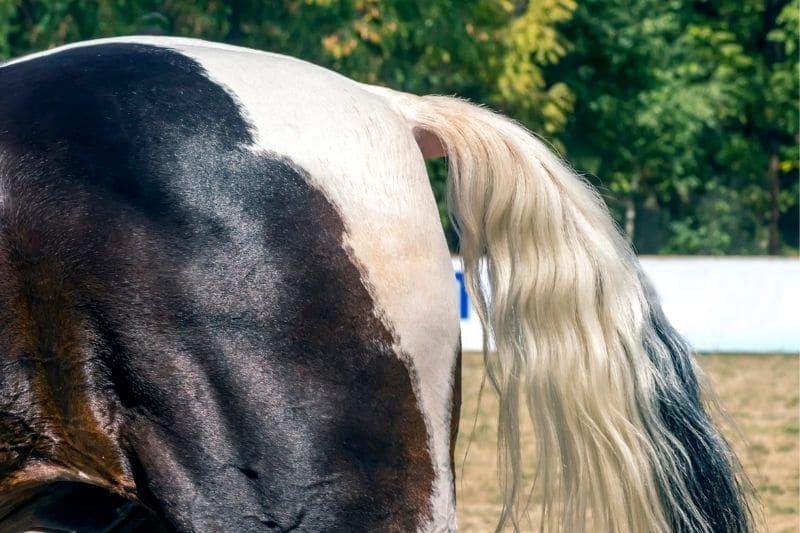Pferdeschweif