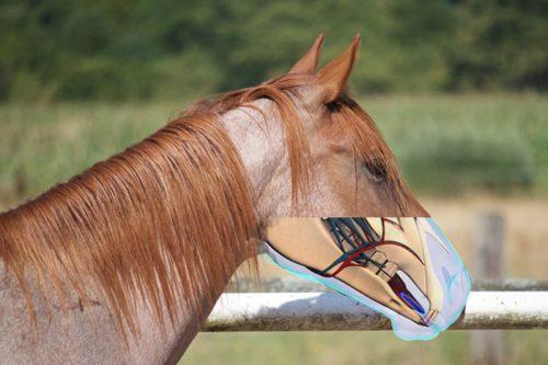 Bild Nase Pferd Anatomie