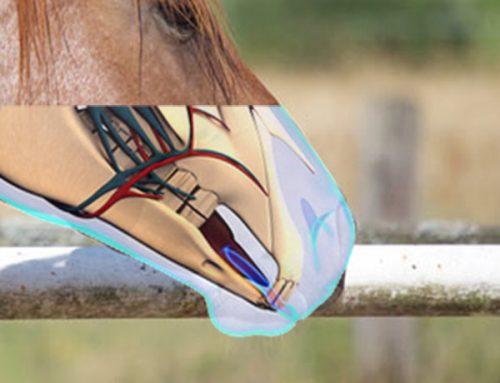 Pferd Maul Anatomie Nah
