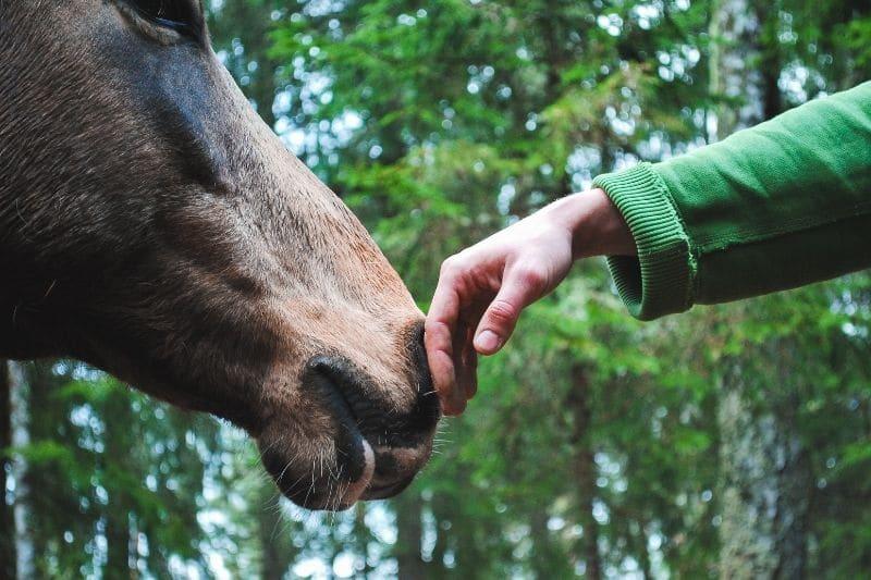Pferdeanatomie erklärt! Maul und Nase und warum beides so wichtig für dein Pferd ist 1
