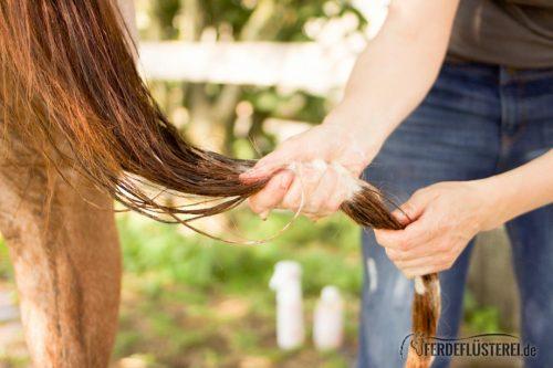 Waschstrasse! Wie du dein Pferd richtig wäschst 1