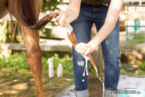 Waschstrasse! Wie du dein Pferd richtig wäschst 4
