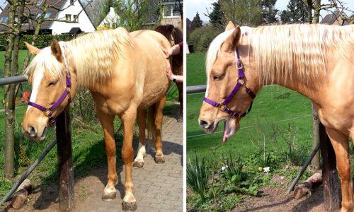 Shiatsu Pferd Massage entspannung