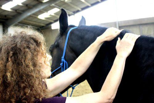 Shiatsu Pferd Massage hals