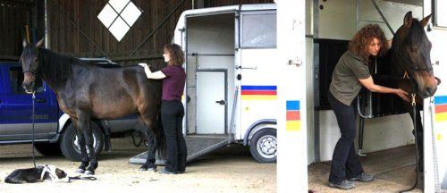 Pferde shiatsu Transporter