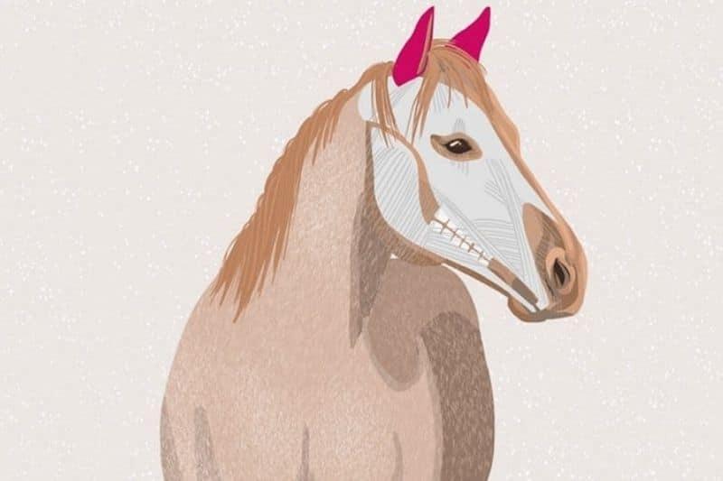 Pferdeohren Blogbild