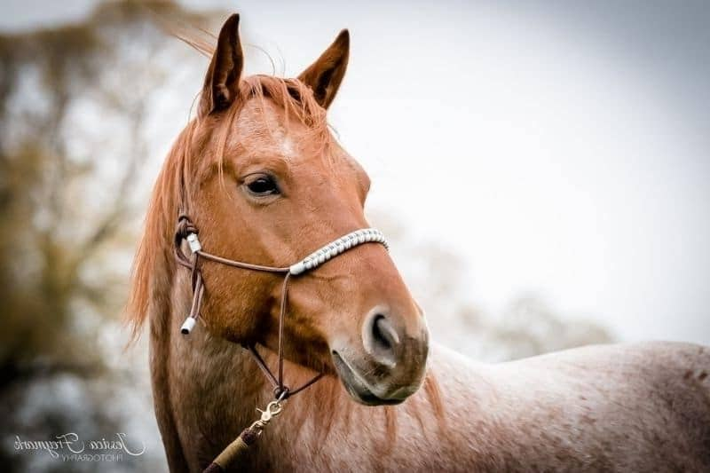 Ohren Pferd Blogbild