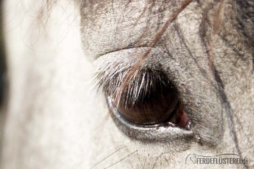 Pferdeanatomie erklärt! Wie die Pferde die Welt sehen 2