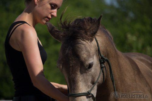 Pferd Bodenarbeit Ohrenspiel