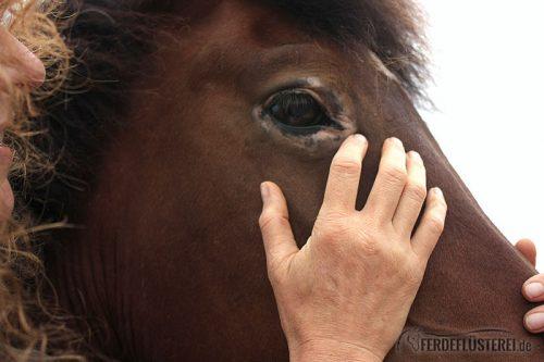 Pferde Shiatsu Wasser