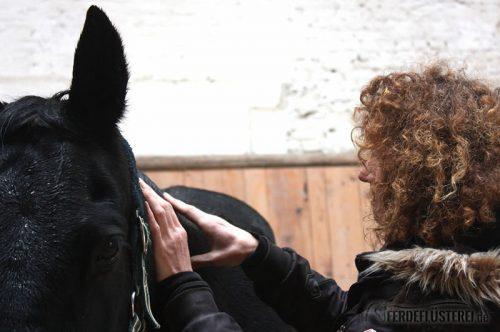 Shiatsu Pferd Massage