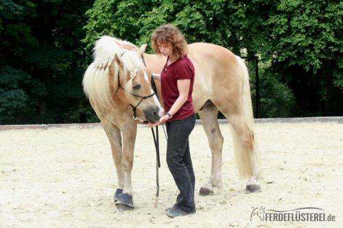 Shiatsu Pferd Massage Haflinger