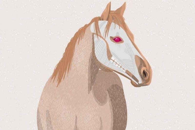 Pferde Auge Blog Bild