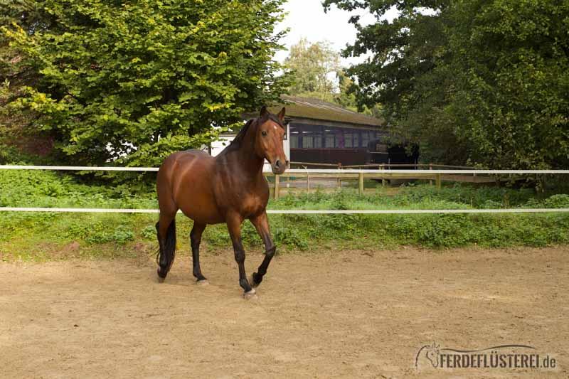 Pas De Deux Wie Wir Die Pferde Zum Tanz Bitten Können