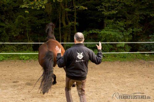 Reiterpension Marlie - Wolfgang Marlie Freiarbeit