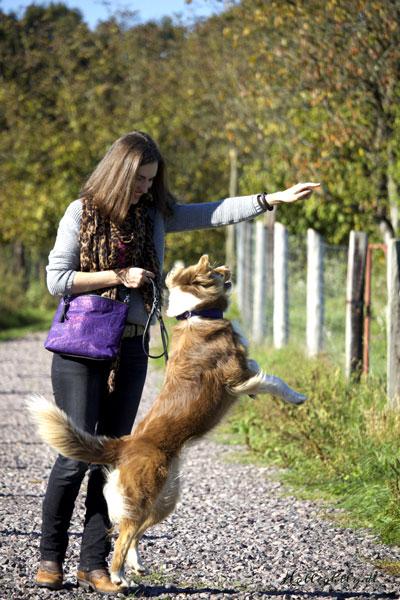 Hunde Training sanft
