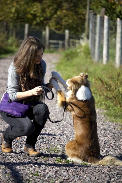 Hunde lieb Umgang
