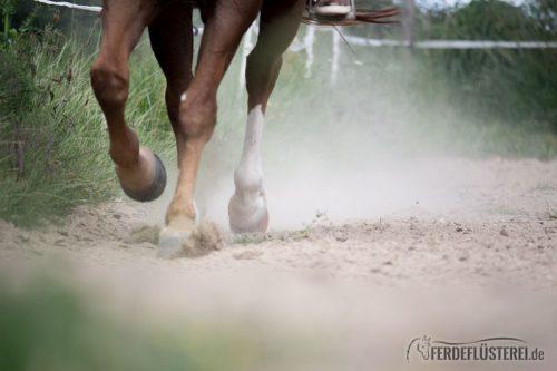 Hufe Pferd