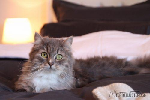 Katze tiergerechte Behandlung