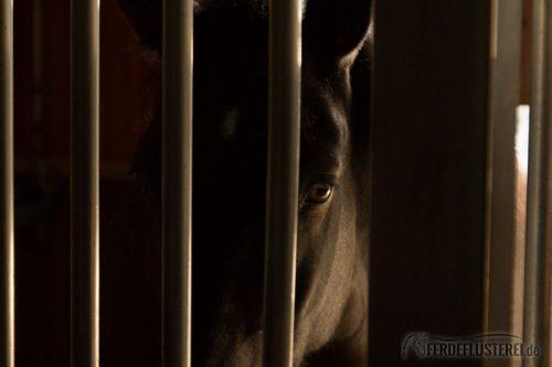 Pferd eingesperrt in der Box