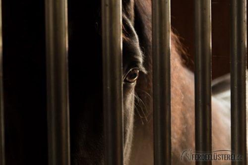 Pferd eingesperrt in der Box nahe