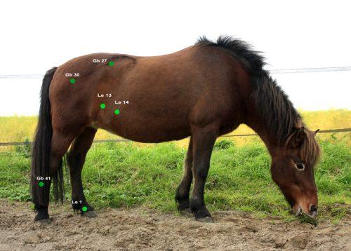 LEberpferd PFerde Shiatsu