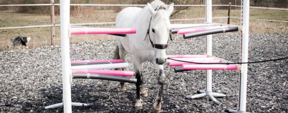 Slider Pferd geht durch Vertrauensgasse