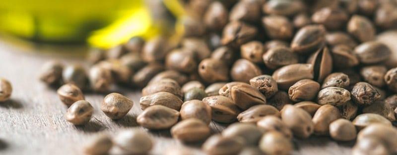 Hanf Samen und Oel