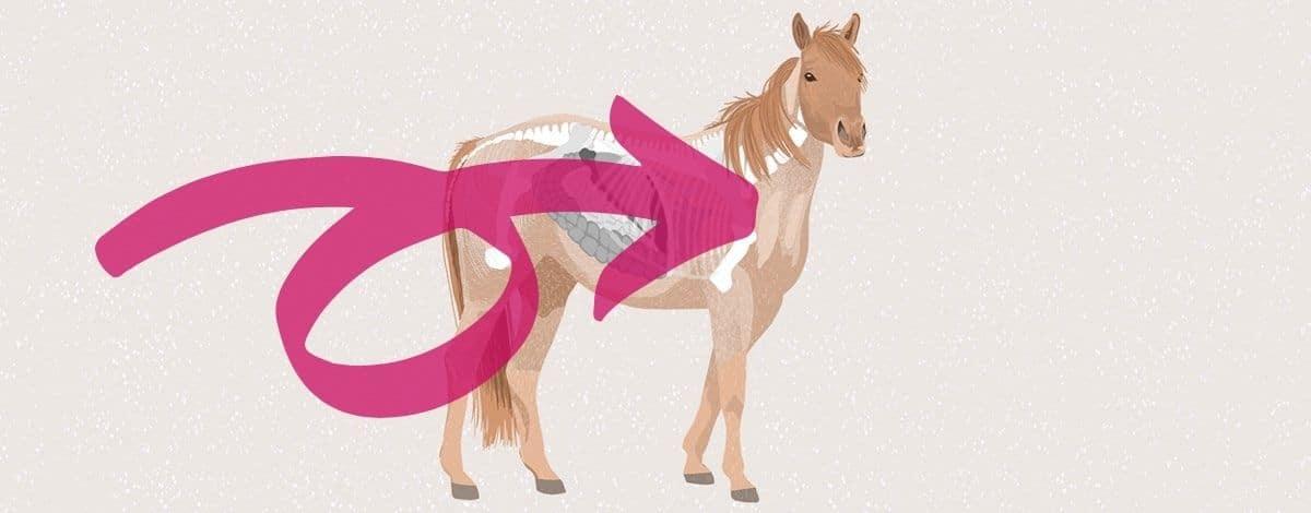 Slider Stoffwechsel Pferd
