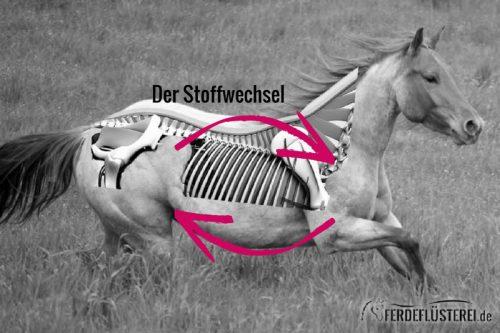 Stoffwechsel Pferd Anatomie