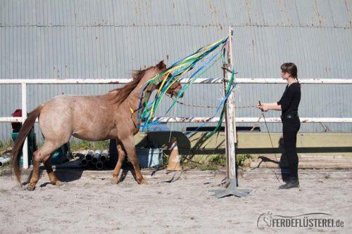 Gelassenheitstraining Pferd Anti-Schreck Training