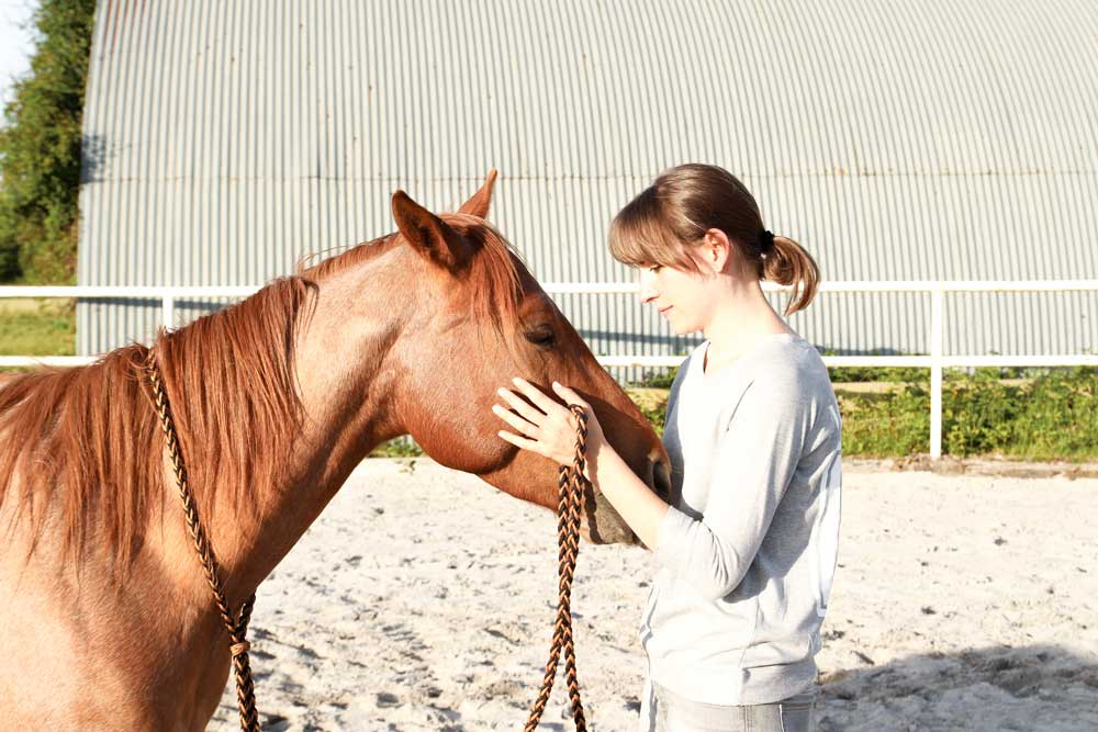 Pferdeflüsterei Blog
