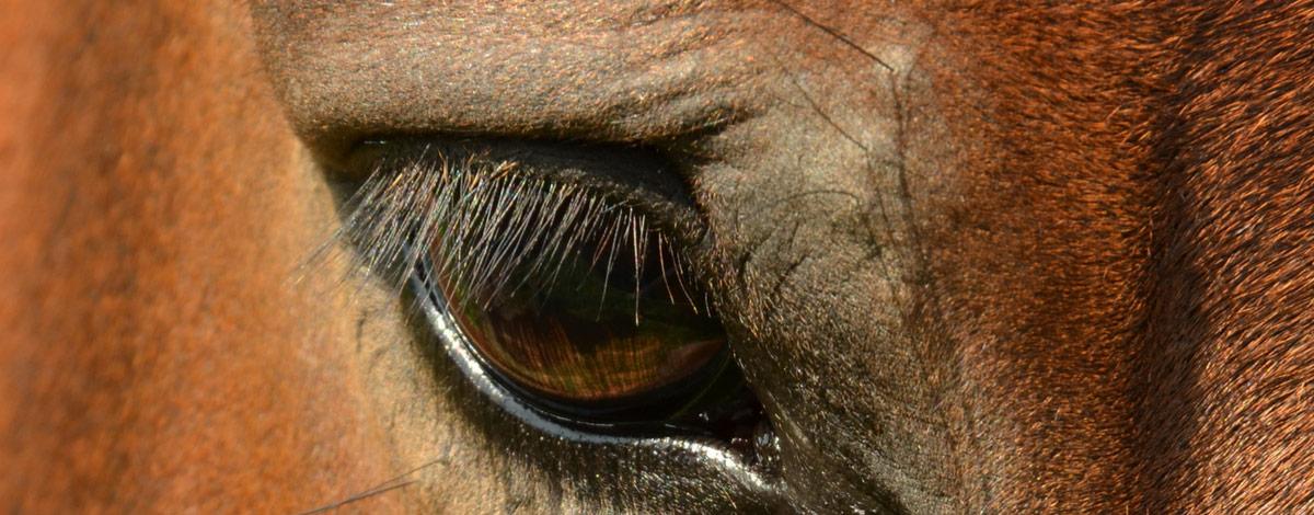 Gestresstes Pferd