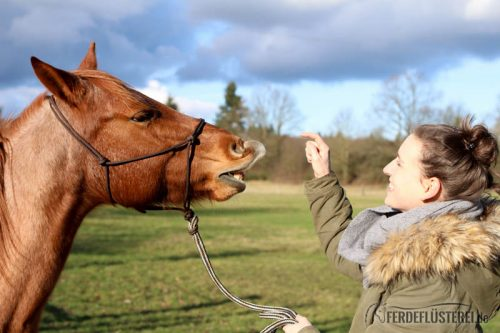 Smile - wie du deinem Pferd das LÄcheln beibringst Tricktraining Pferd