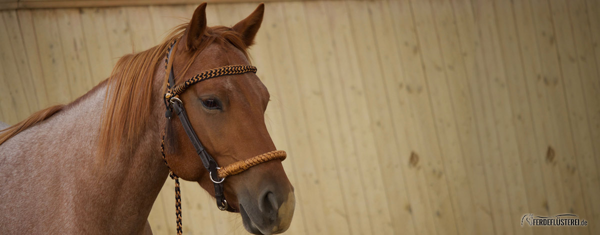 Ausrüstung Pferd Slider