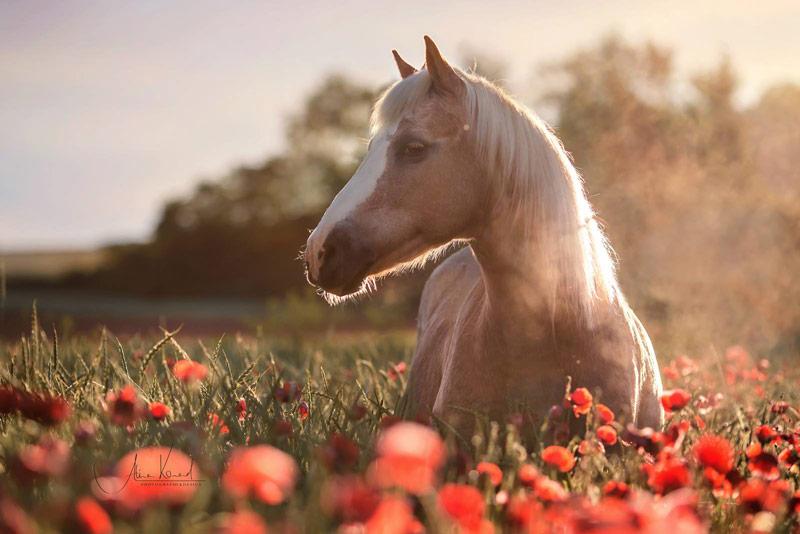 7 Tipps Wie Du Garantiert Schönere Fotos Von Deinem Pferd Machst
