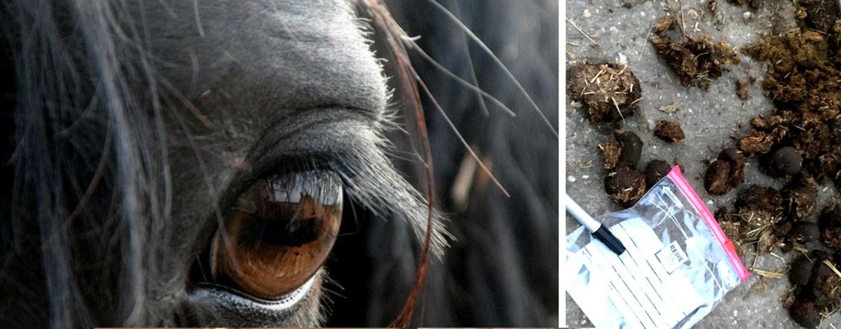 SLIDER Wurmkur Pferd