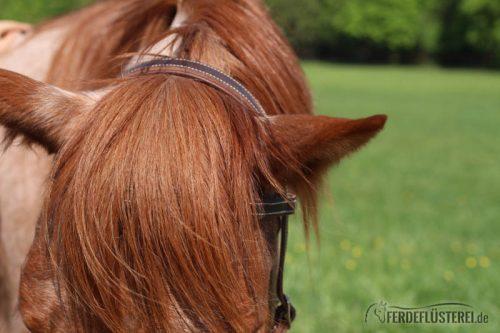Pferd Persönlichkeit Dominant Carey