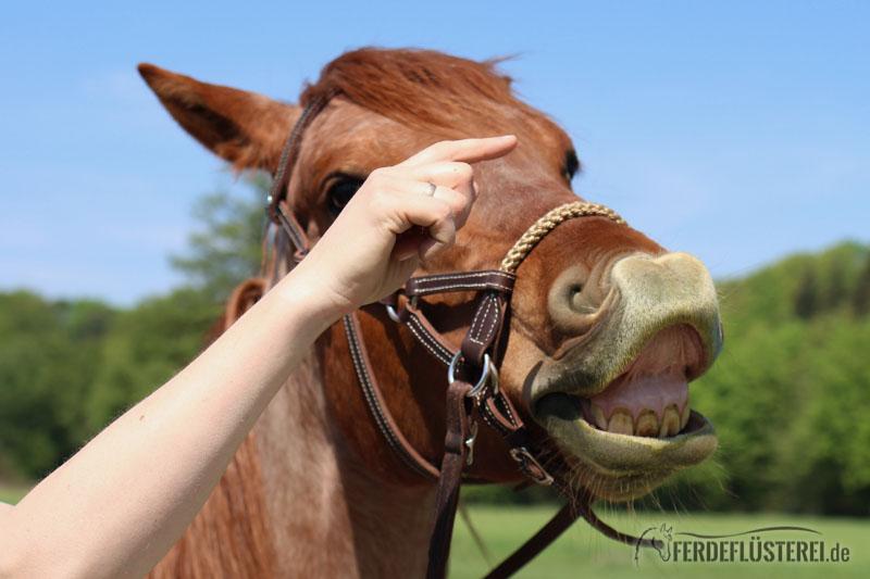 Pferde können lächeln