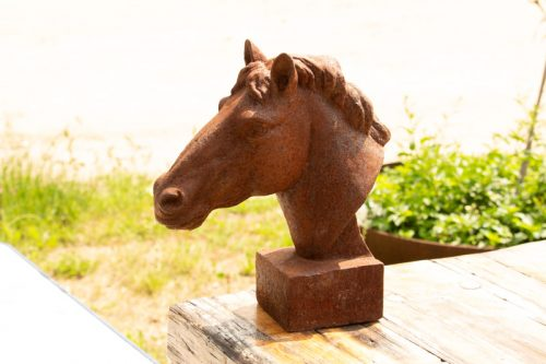 Curly Horse 11