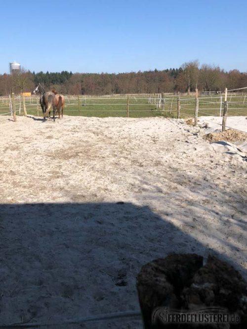 Stallwechsel Pferd Carey Fohlenhof Heutoy Heufresser