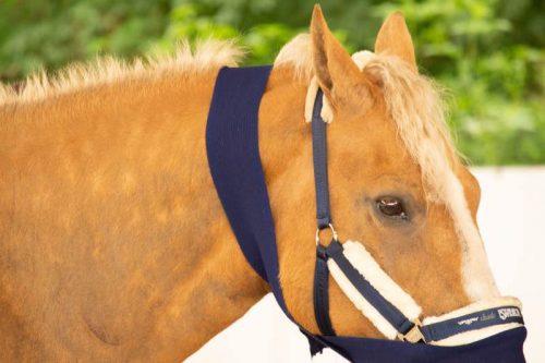 Vertrauen statt Kontrolle! Sanftes Pferdetraining a la Tellington-Jones 4